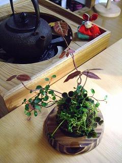 2011_0221三日月豆0036