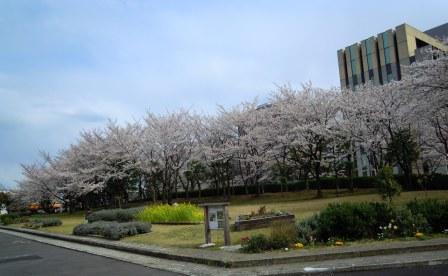 1204_201ekisakura.jpg