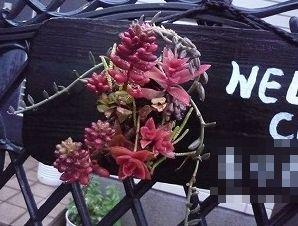 多肉植物ウエルカムボード