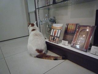 ミュージアムショップ猫2