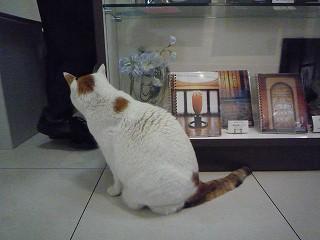 ミュージアムショップ猫3
