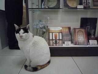ミュージアムショップ猫4