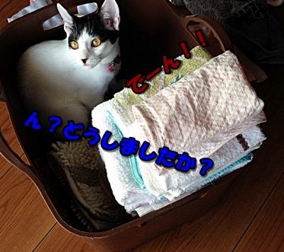 洗濯物邪魔2