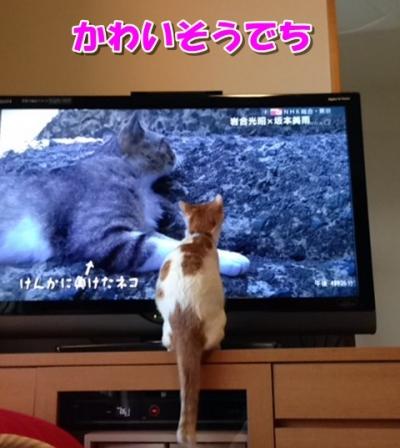 ここテレビ見る2