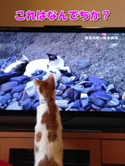 ここテレビ見る1