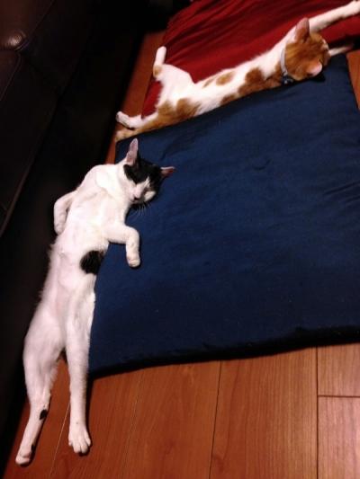 ここそらおっさん寝姿3