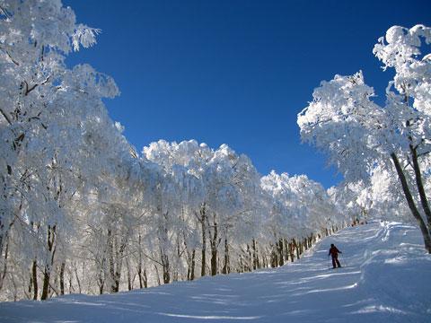 稗田山林間の樹氷