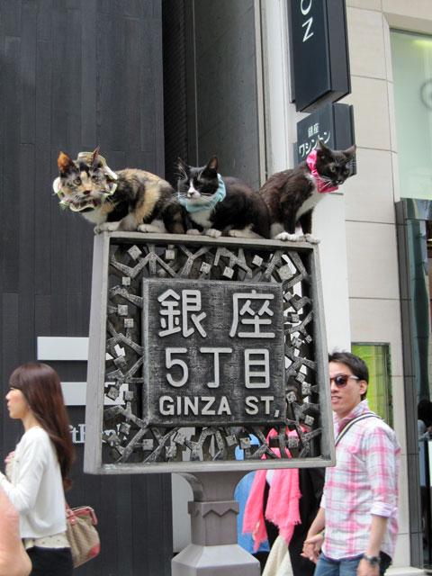 銀座5丁目の猫2