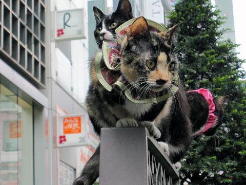 銀座5丁目の猫1