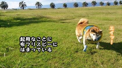 DSC_0106_a.jpg