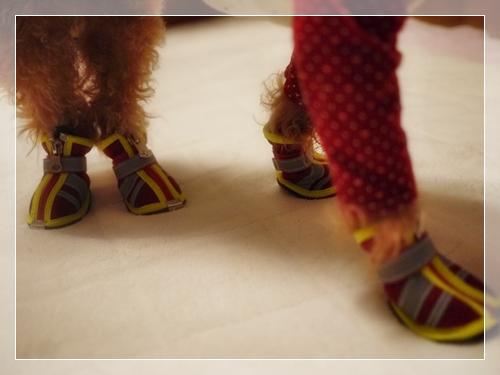 ワンコ靴3