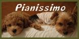 PP☆(Pianissimo)バーナー