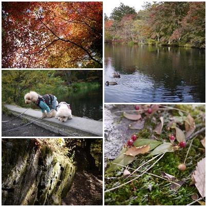 2011年10月軽井沢7