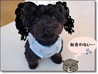 CIMG1916_20111108085615.jpg