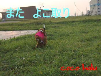 CIMG2001.jpg