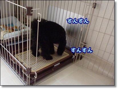 CIMG2893_20111208081310.jpg