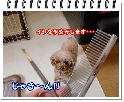 CIMG2993_20111207065923.jpg