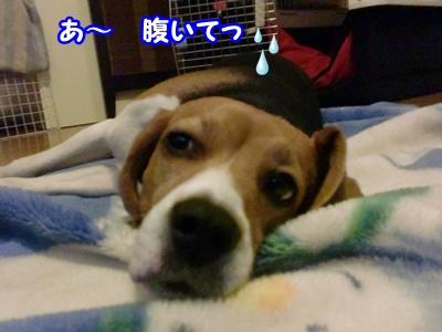 CIMG3289_20111231061342.jpg
