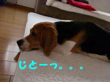 CIMG3608.jpg