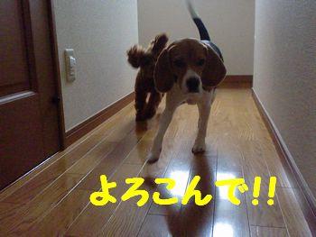 CIMG4421.jpg