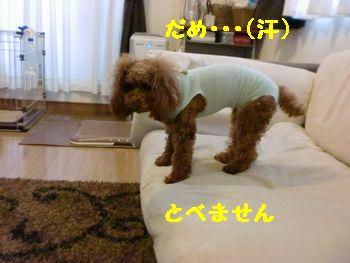 CIMG5749.jpg