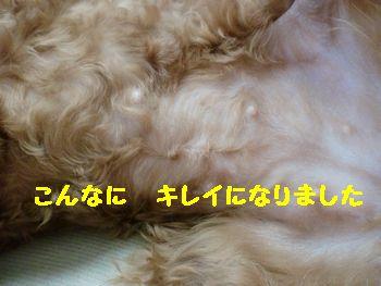 CIMG6054.jpg
