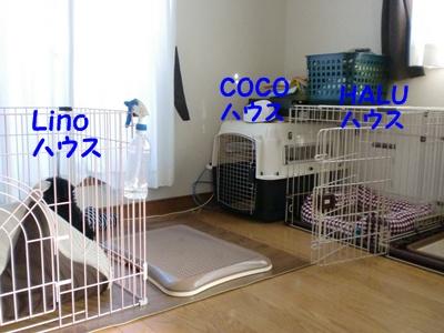 CIMG7382.jpg