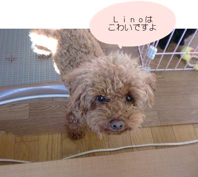 CIMG7387.jpg