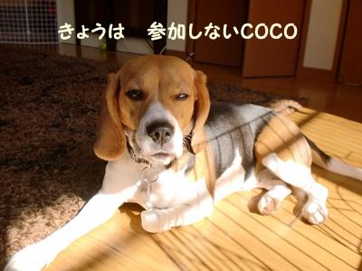 CIMG7468.jpg