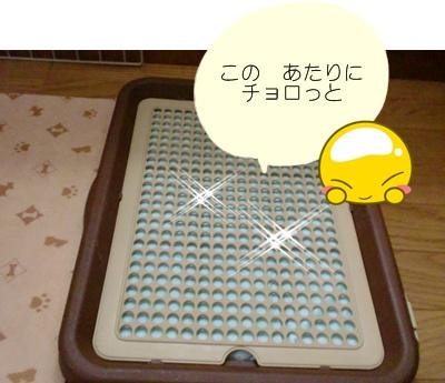 CIMG7863.jpg