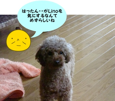 CIMG9778.jpg