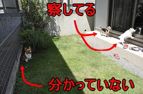 20100807_5.jpg