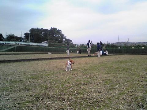 20101019_10.jpg