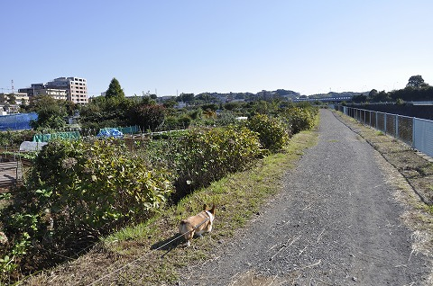20101103_7.jpg