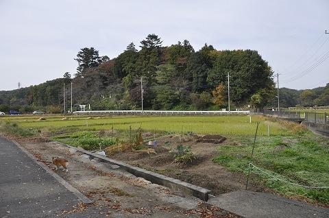 20101114_1.jpg
