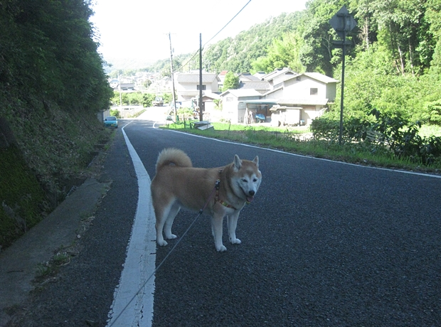 夏の散歩は影しか歩きません