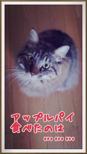 2014-02-02-11-34-00_deco.jpg