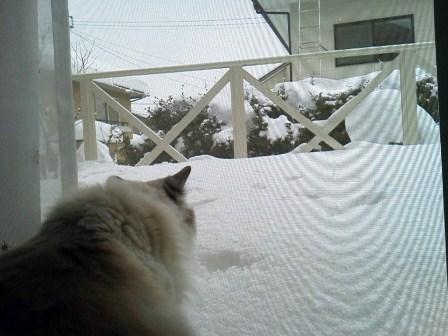 新しいデッキも雪ねぇポポ