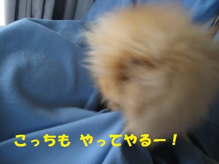20140926_4.jpg