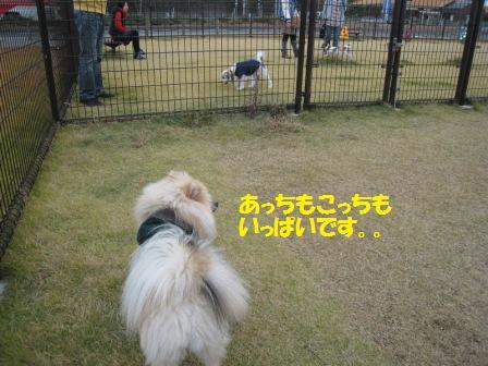 20141124_4.jpg