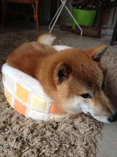 1仁ベッド