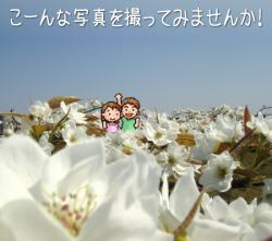 梨の花 こんな写真撮ってみませんか?