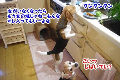 キッチン 7