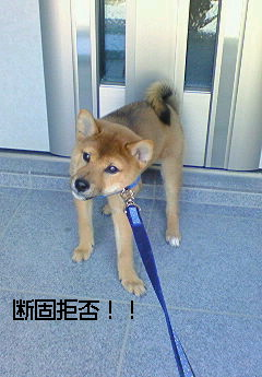 虎徹初散歩