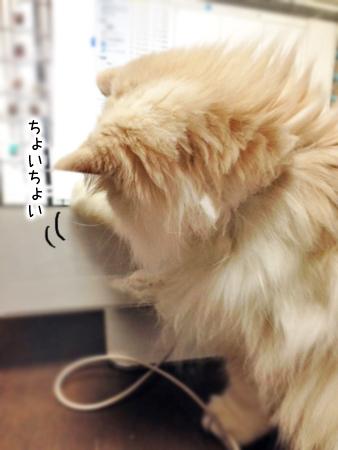 ぶーこ2013.12.12②