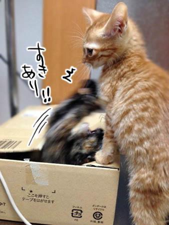 まー坊るる2013.12.26②