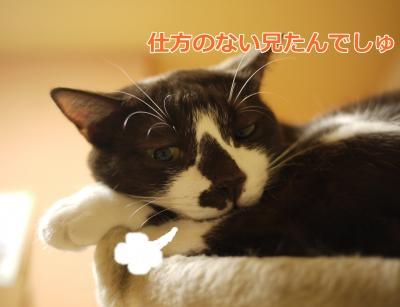 030_convert_20131219000120.jpg