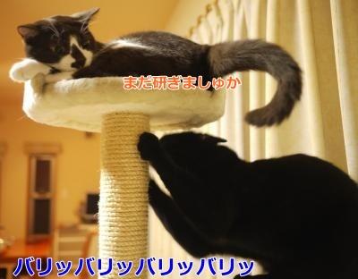033_convert_20131218235940.jpg