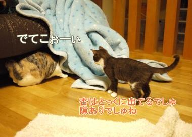 077_convert_20120221171437.jpg
