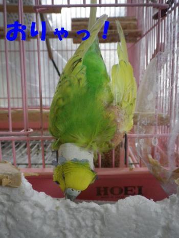 3sai_20110920091405.jpg